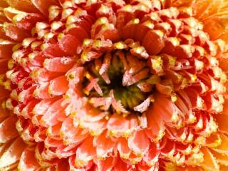 обои Цветы фото