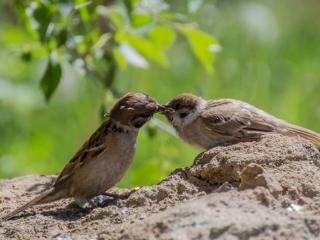 обои Птицы фото
