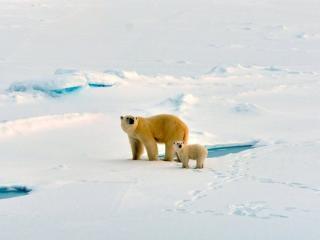 обои для рабочего стола: За полярным кругом