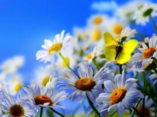 обои Бабочки фото
