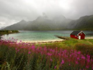обои Wildflowers, Lofoten, Norway фото