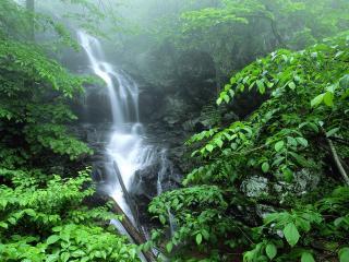 обои Lower Doyles River Falls, Virginia фото