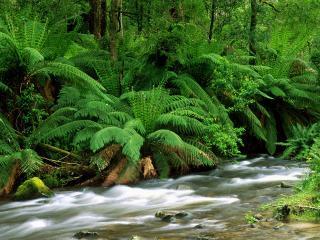 обои для рабочего стола: Yarra Ranges National Park, Australia
