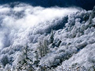 обои Зимняя дымка над лесом фото