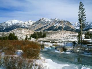 обои Зимний ручей в горах, у высокой сосны фото