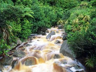 обои Летний ручей в Новой Зеландии фото