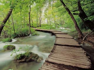 обои Мостик вдоль весеннего ручья, Национальный Парк Плитвиса, Кроатия фото