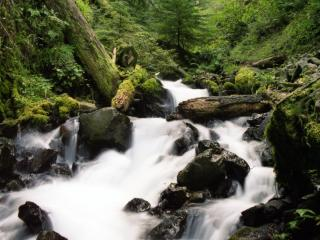 обои Быстрый лесной, летний ручей фото
