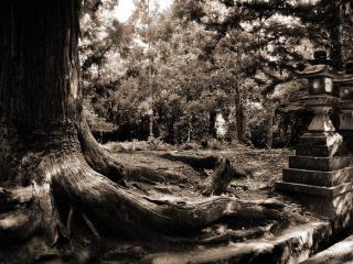 обои Загадочный лес полон тайн фото