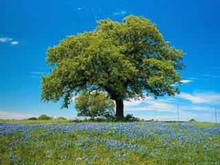 обои Деревце фото