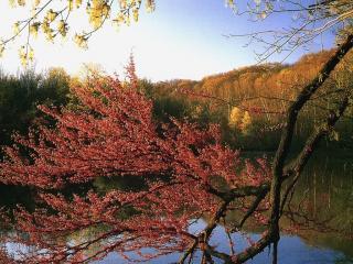 обои Дерево и озеро фото