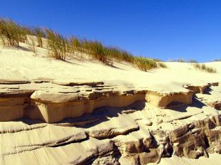 обои Ветер в дюнах фото