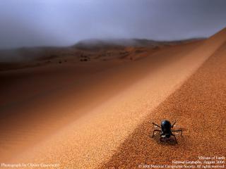 обои Мрачный жук фото