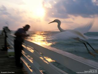 обои Рыбак и огромная белая цапля фото