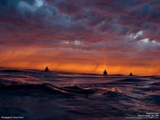 обои Серфингисты в океане фото