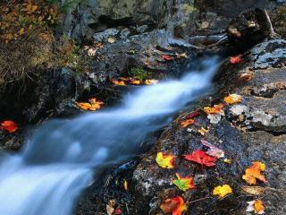 обои Опавшие листья по краям осеннего ручья фото
