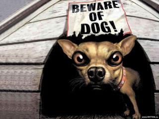обои Beware of dog фото