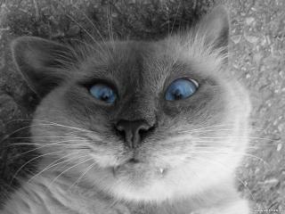 обои Морда кота фото
