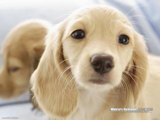 обои Красивый щенок фото