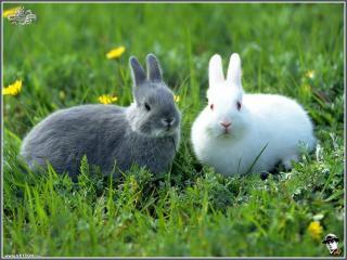 обои Зайцы на травке фото