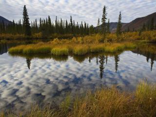 обои Boreal Forest, Ogilvie Mountains, Yukon, Canada фото