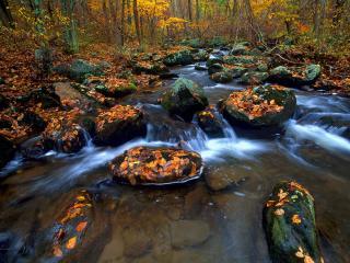 обои Осенний ручей, между камней фото