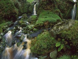 обои Cascading Waterfalls Among Ferns and Mosses, Gough Island фото