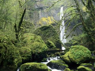 обои Elowah Falls, Oregon фото