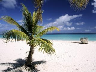 обои Palm Tree, Loyalty Islands, New Caledonia фото