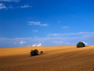 обои Несколько деревьев среди пустынной степи фото