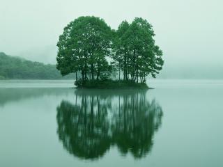 обои Островок с деревьями фото