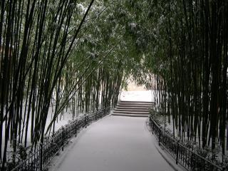 обои Бамбуковая дорожка фото