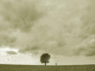 обои Одиночество фото