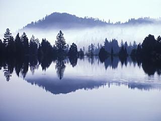 обои Morning Mist фото
