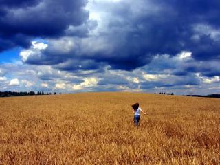 обои Свобода в поле фото