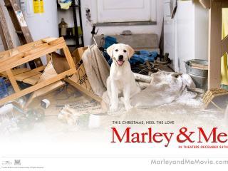 обои Марли и я - собачка фото