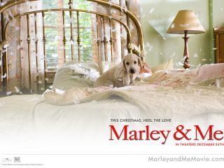 обои Марли и я - собака на кровати фото