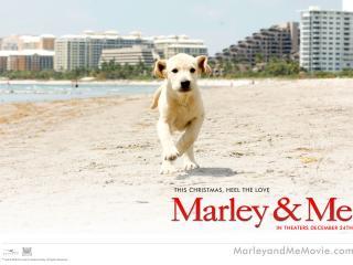 обои Марли и я - собака на пляже фото