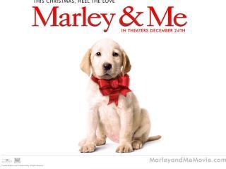 обои Марли и я - собачонка фото