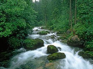обои Peaceful Forest фото