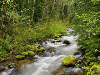 обои для рабочего стола: Still Creek, Mount Hood National Forest, Oregon