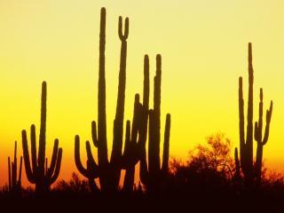 обои Рассвет в пустыне фото