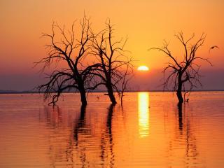 обои Деревья посреди реки фото