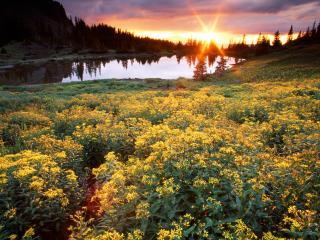 обои Рассвет на озере фото