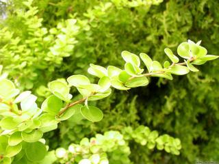 обои Зеленая ветка фото