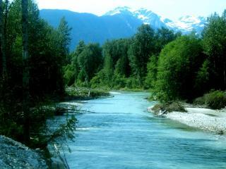 обои для рабочего стола: Река среди зеленых деревьев