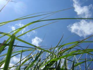 обои Трава на фоне голубого неба фото