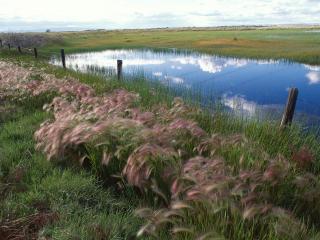 обои Весенний пруд за забором фото