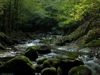 обои Речка течет между камней фото