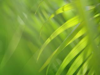 обои Вид на траву сквозь траву фото